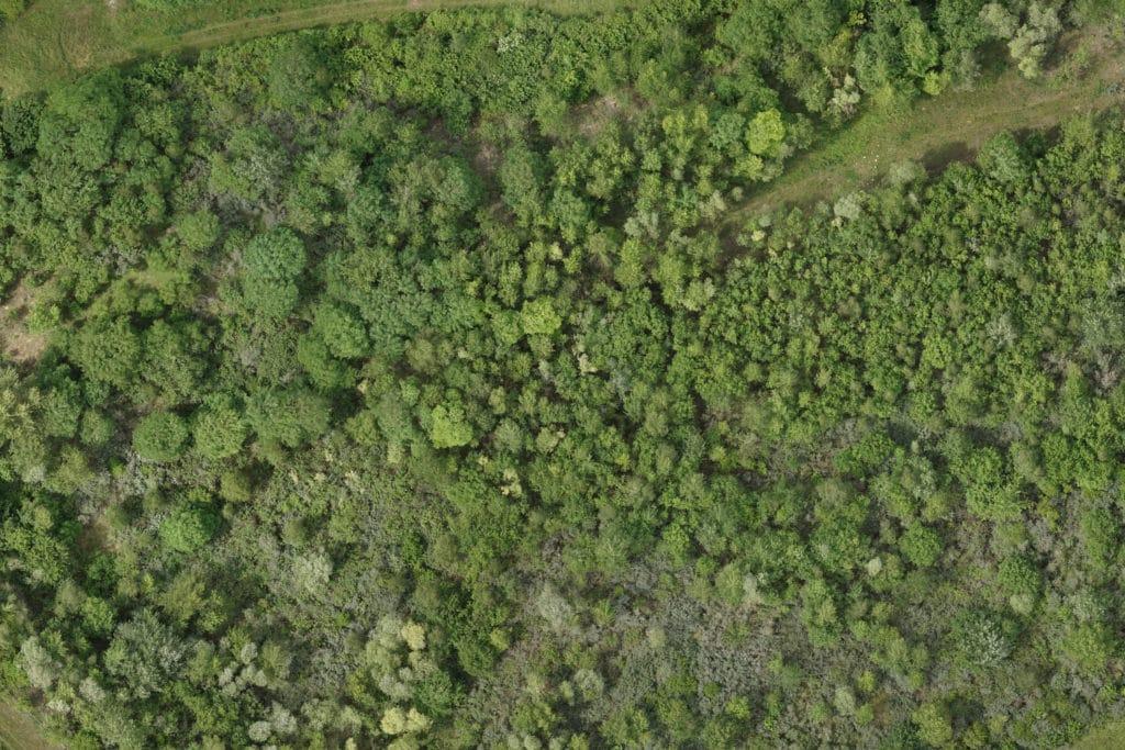 Drohnen-Service-zur-Bestandsaufnahme-in-der-Forstwirschaft-mit-Drohne-Agrar-Landwirtschaft-Forstwirtschaft