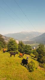 Talblick-Fidaz-Flimserstein-Milchseilbahn-Photogrammetrische-Drohnenaufnahmen-digitales-Gelaendemodell-Milchseilbahn-Fidaz-Flims-Schweiz