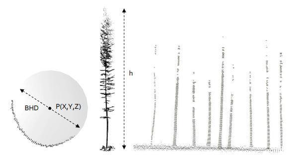 Forstinventurrelevanten-Baumparametern-aus-UAV-LiDAR-Befliegung-Begehung-Forstwirtschaft-Baum-Hoehe-Stamm-Stammprofil-Stammvolumen-1