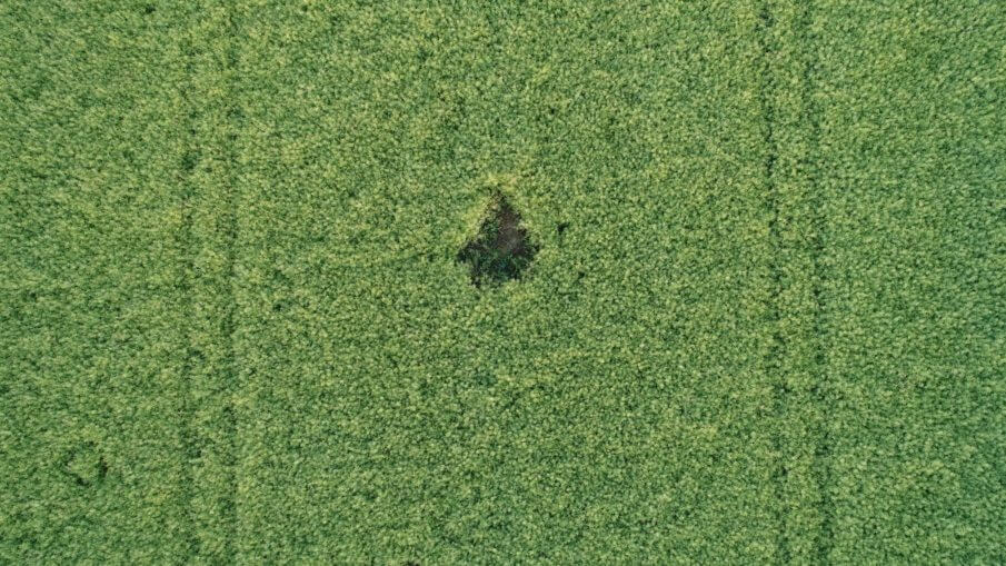 Luftaunahme-von-Drohne-Wildschaden-1